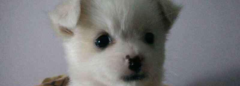 小狗多久睁眼 小狗几天睁眼睛