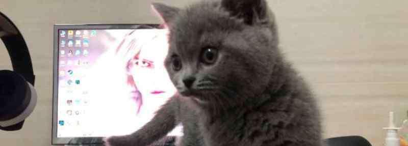 猫为什么怕水 猫为什么怕水