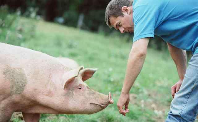 养猪猪舍 小型养猪场50一100头图