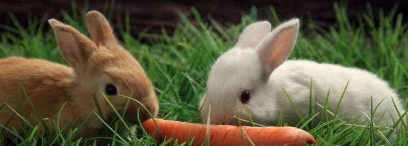 兔子爱吃胡萝卜 兔子爱吃胡萝卜吗,兔子其实不怎么吃胡萝卜