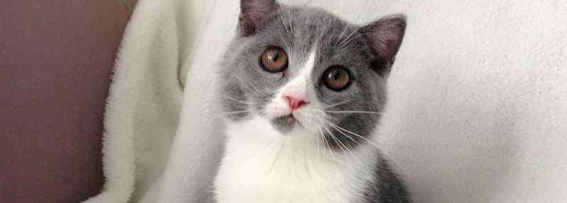 四联疫苗包括哪些 猫咪四联疫苗包括哪些