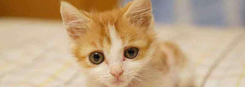 猫的瞳孔 猫的瞳孔为什么会变