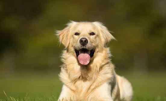 吉祥名字 很吉利吉祥的狗狗名字