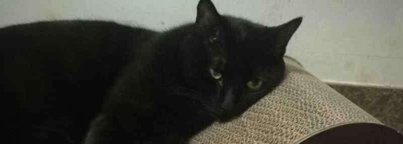 猫几个月生小猫 几个月的猫需要猫抓板,猫抓板猫多大可以用