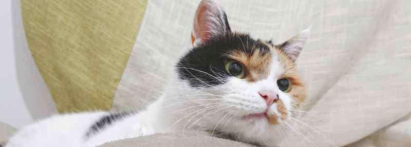 猫咪踩奶是什么意思 猫踩奶是什么意思