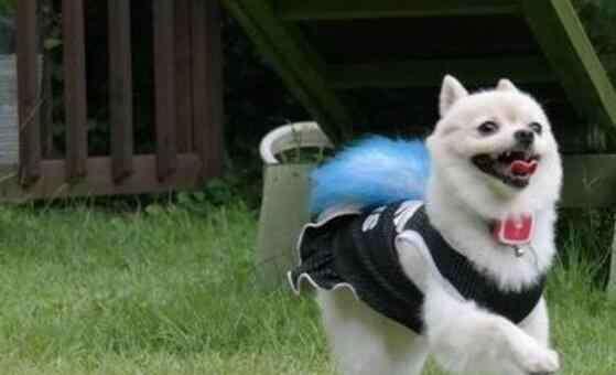 狗狗丢了千万不能找 狗狗丢了一般会躲哪里
