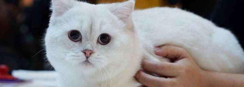 失格是什么意思 赛级猫是什么意思