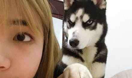 狗没把你当主人的表现 狗没把你当主人的表现