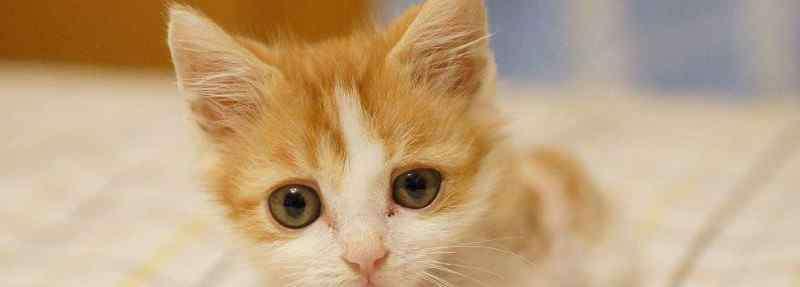 猫一只眼睛有点睁不开 猫咪一只眼睛睁不开怎么回事
