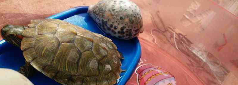 乌龟不吃东西 乌龟可以多久不吃东西