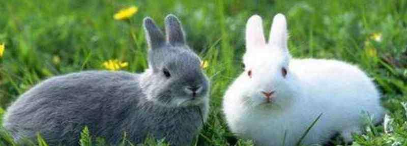 兔子靠什么分辨主人 兔子靠什么分辨主人