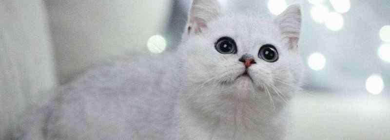银点猫 银点猫眼睛变色过程