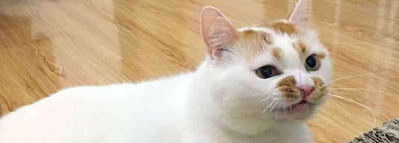 猫咪呕吐没消化的猫粮 猫吐了没消化的猫粮