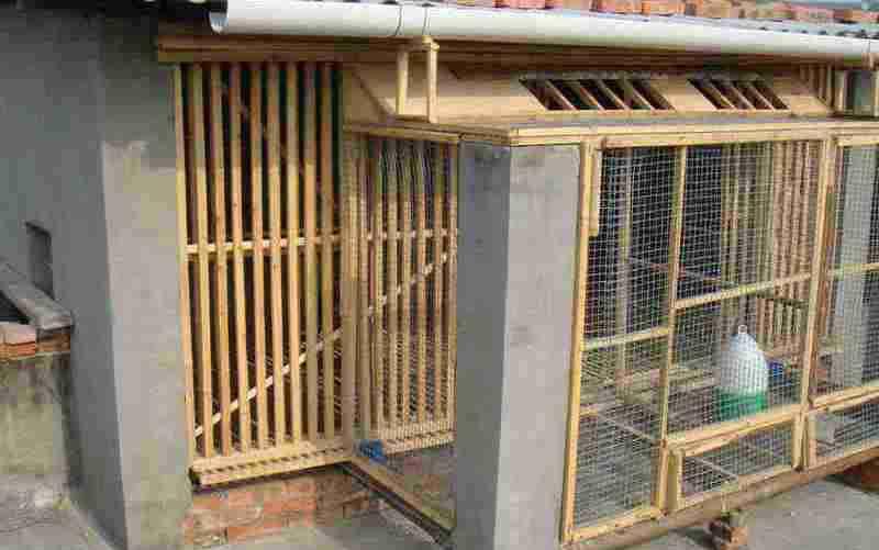 自己家建个鸽子棚图片 穷人养20只鸽子棚图