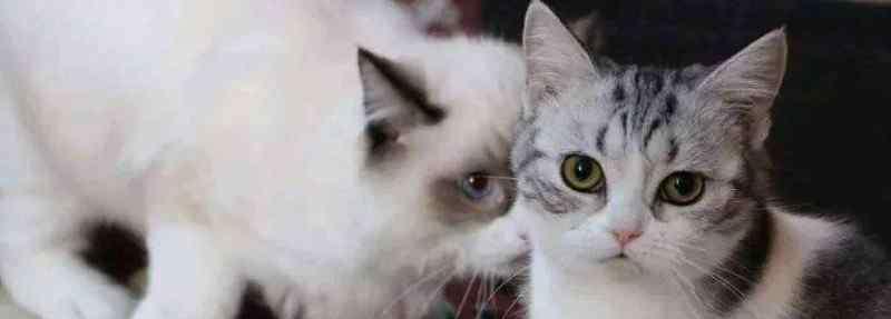 猫咪洗澡可以用人用的沐浴露吗 猫可以用人的沐浴露吗