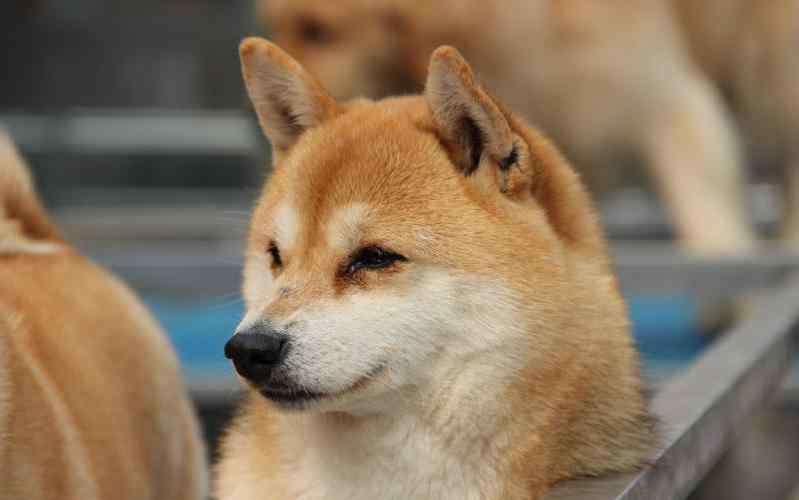 体内驱虫多久一次 狗狗体外驱虫多久一次