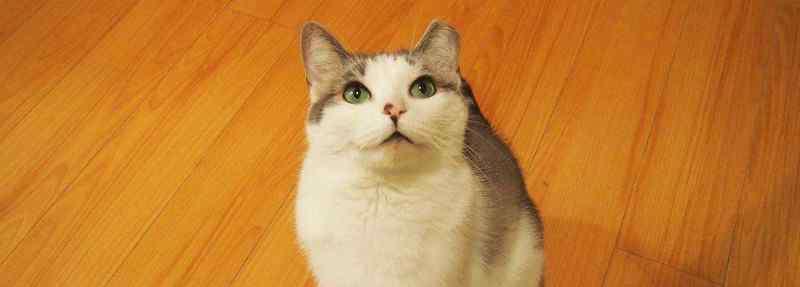 猫一天吃多少猫粮 成猫一天吃多少克猫粮
