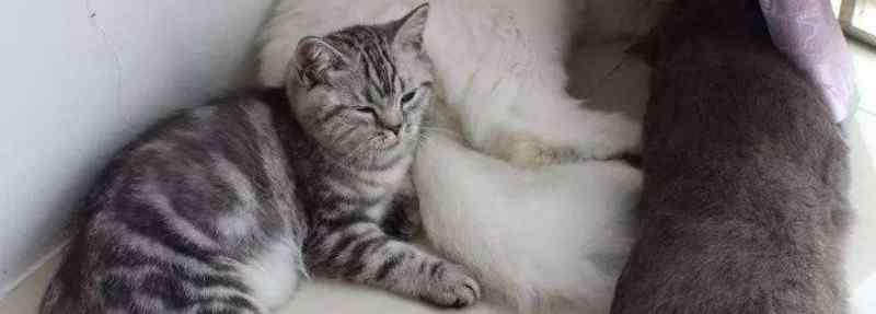 猫咪嗜睡是怎么回事 猫咪突然没精神总睡觉怎么回事
