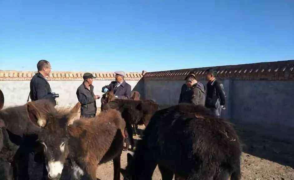 养肉驴 养10头肉驴一年的利润