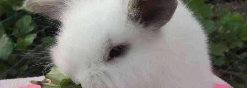 兔子可以用眼睛分公母 兔子的眼睛能分辨公母