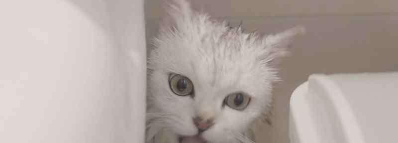 给猫洗澡要注意事项 给猫咪洗澡注意什么