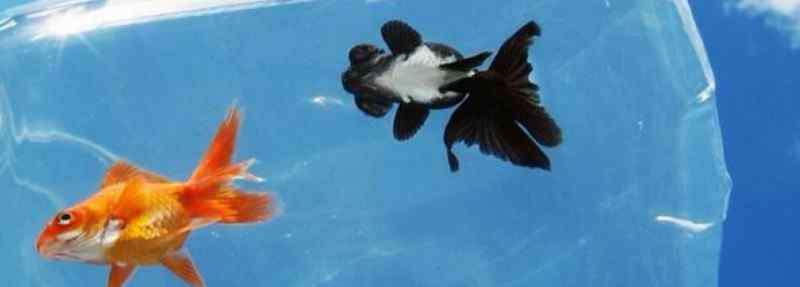 鱼的记忆 鱼的记忆有多久