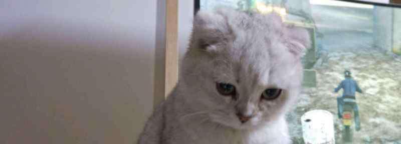猫咪发情怎么办 猫咪发情怎么办