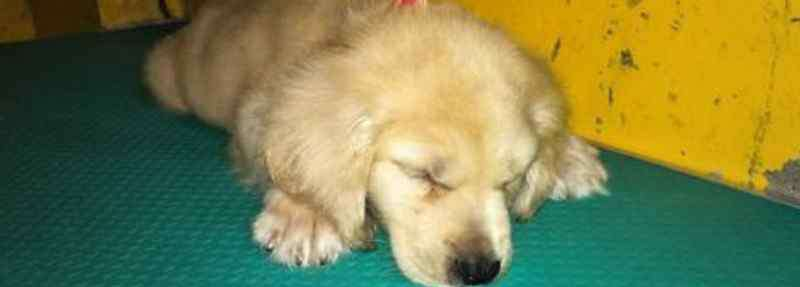 狗狗睡觉时候抖动抽搐 狗抽筋发抖怎么办