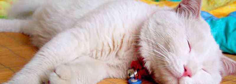 猫一天睡多久 猫一天睡多久