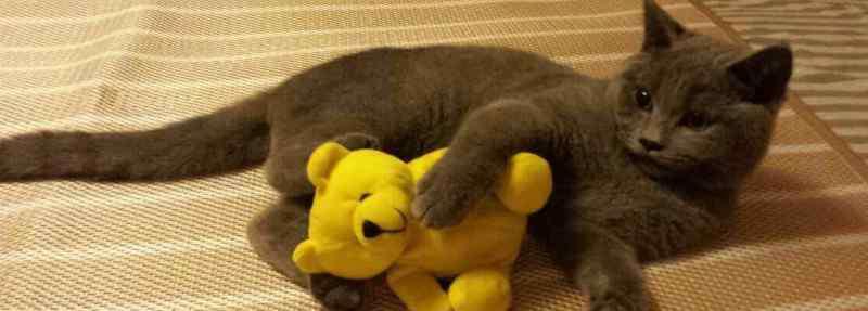 猫咪毛囊炎 猫毛囊炎和猫藓的差别