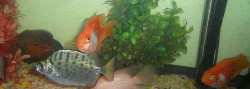 鱼缸养几条鱼最好 养鱼养几条好