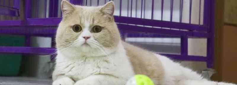 猫咪便秘 猫咪便秘怎么办