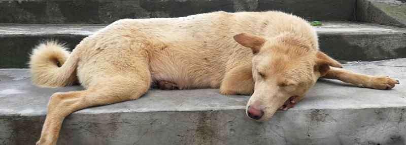 土狗的寿命有多长 土狗的寿命有多长,土狗能活到多少岁