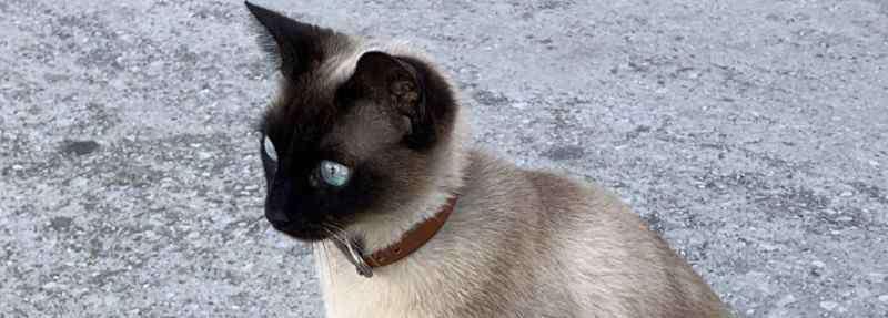 猫咪口臭是什么原因 小猫很精神但是口臭怎么回事