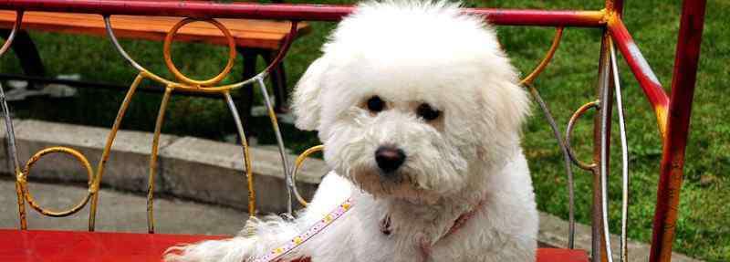 狗狗拉稀但是精神很好 狗狗拉稀但是精神很好怎么回事