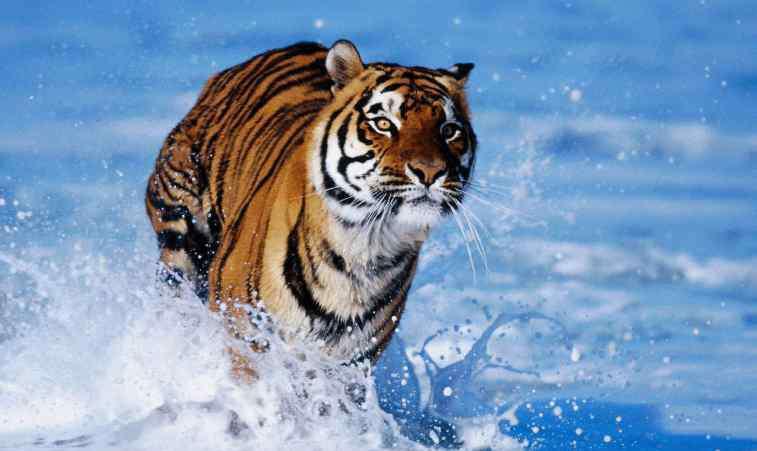 保护珍稀动物 国家级珍稀动物10种