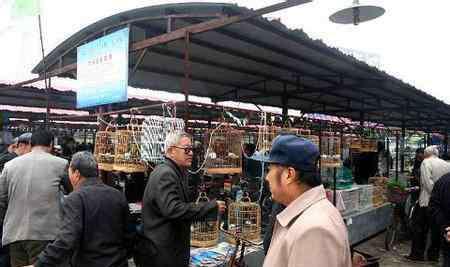 北京宠物用品批发 宠物用品十大批发市场