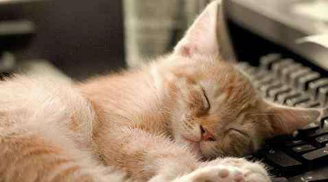 长期失眠会引发什么病 失眠的危害有哪些?失眠会导致哪些疾病