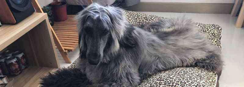 狗有哪些品种 长毛狗有哪些品种