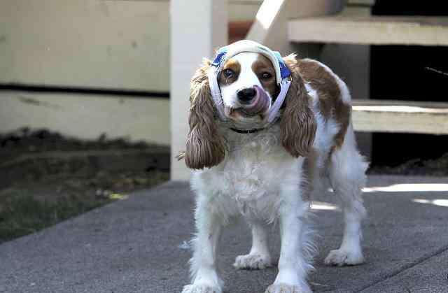 如何测试狗狗主人地位 如何知道狗狗认了主人
