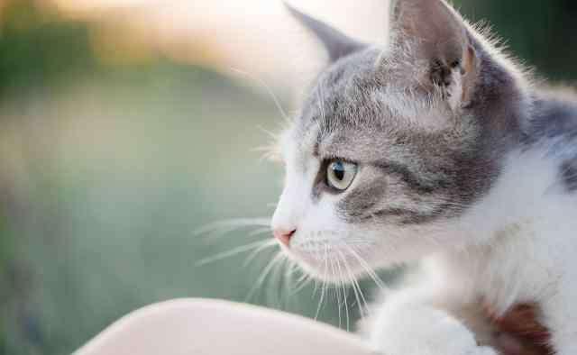 猫看到鬼会保护主人吗 猫咪对主人会有感情吗