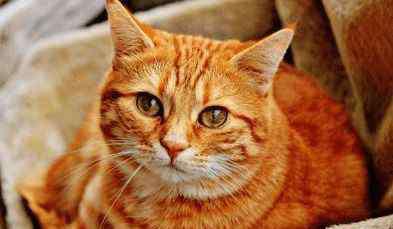 超搞笑的网名 猫咪奇葩又好听的名字,超级搞笑