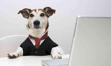 喂养宠物狗 适合女生上班族养的狗 小巧可爱好喂养小型犬最