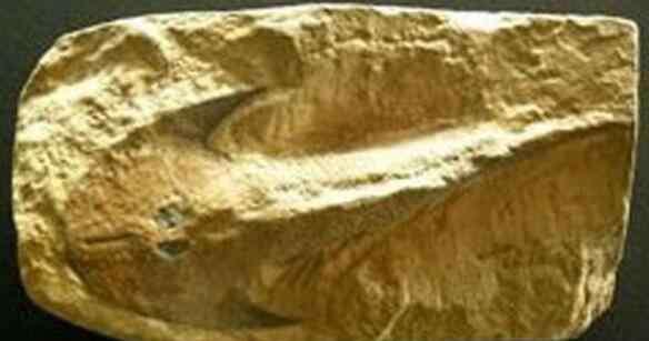 chupacabra 比恐龙更可怕800种动物