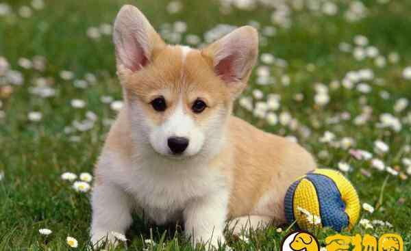 肛门温度多少正常 狗狗体温多少正常,量体温需要将体温计插入肛门(37.5-39℃)