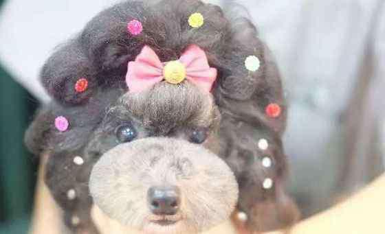 宠物美容师吧 千万不要干宠物美容师