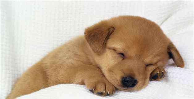 宠物狗能吃西瓜吗 狗狗能吃冰西瓜吗