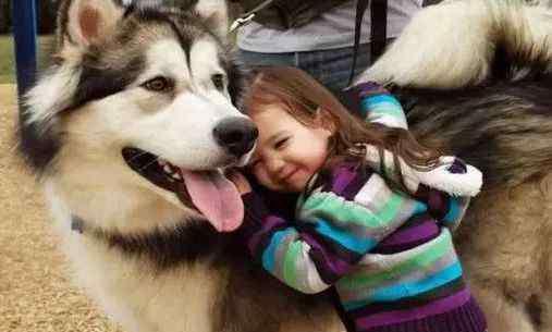 狗狗很依赖主人的表现 狗狗很依赖主人的表现 是不是狗狗也很可爱呀