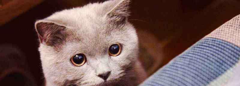 瞳孔放大的原因是什么 猫瞳孔放大是怎么回事
