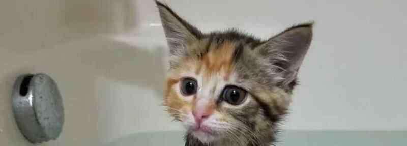 猫多大可以洗澡 小猫能洗澡吗,小猫多大可以洗澡